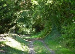 Sentier de ballade de Cernoy-en-Berry