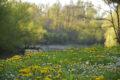 Bonny sur Loire – La Cheuille – 17 avril 2018 – OT Terres de Loire et Canaux – IRémy (2)