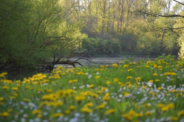 Bonny sur Loire – La Cheuille