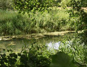 Bonny sur lOire – Iles de Bonny – 24 juin 2018 – OT Terres de Loire et Canaux-IRémy (5)
