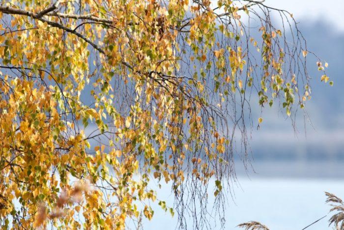 Ouzouer sur Trézée-gite du canal le Chaloy-Bouleau au bord de l'étang