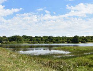 Champoulet – étang de la Cahauderie – 1er août 2018 – OT Terres de Loire et Canaux -IRémy  (16)