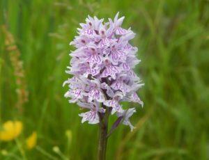 Ecotourisme-wild-orchid-4071386-1920