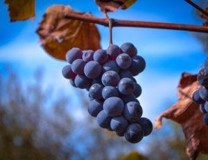 GRAPPE-DE-RAISIN-grape-4679875-1920