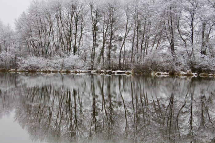 Ouzouer sur Trézée-gite du canal les fichus-L'étang des Fichus