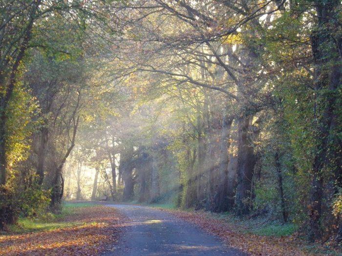 Nature – paysage d'automne