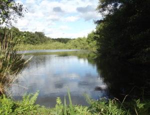 Ouzouer sur Trézée – Etang des Fichus – 13 septembre 2017 – OT Terres de Loire et Canaux – I Rémy (4)