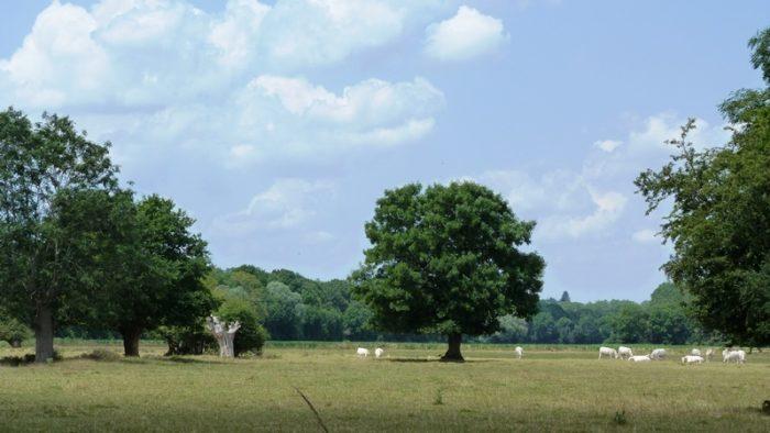 Châtillon-sur-Loire