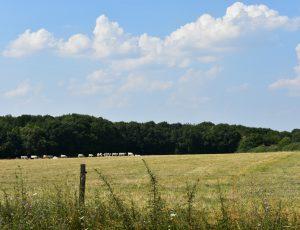 Pierrefitte es Bois – paysage col des Etourneaux – 26 juillet 2018 – OT Terres de Loire et Canaux – IRémy (1)