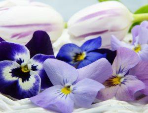 fleur-comestible-400500-3176417-1920